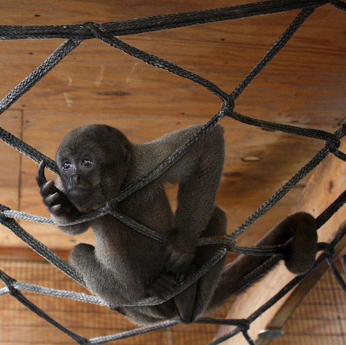 Шерстистые обезьянки нашли новый дом
