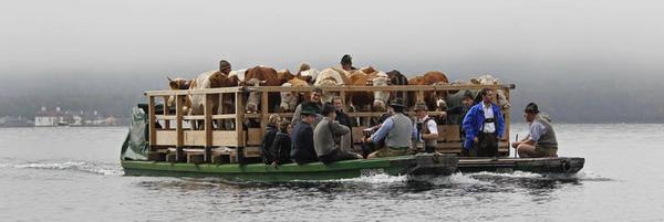 На фестивале Альмабтриб скот переправляют на лодках через Кёнигзее