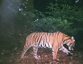 """Всемирный фонд дикой природы: отчет """"Живая планета 2010"""""""