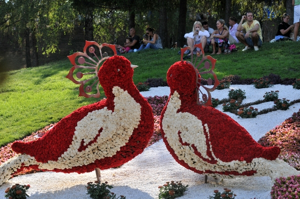 75 kii 5 - Выставка цветов «Река вышиванок» открылась в Киеве