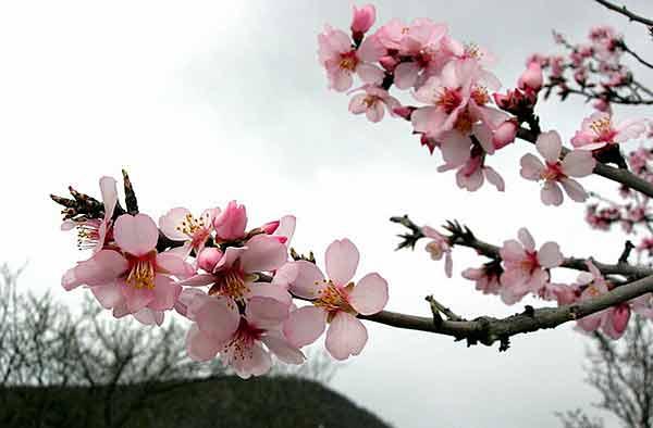 Крым. Весна в окрестностях Упинского водопада. Фотообзор