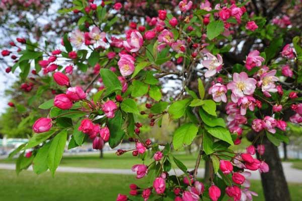 Канада. Весна на берегах Онтарио. Фотообзор