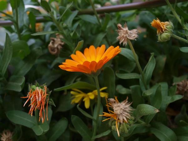 Зимние цветы Израиля. Фотообзор