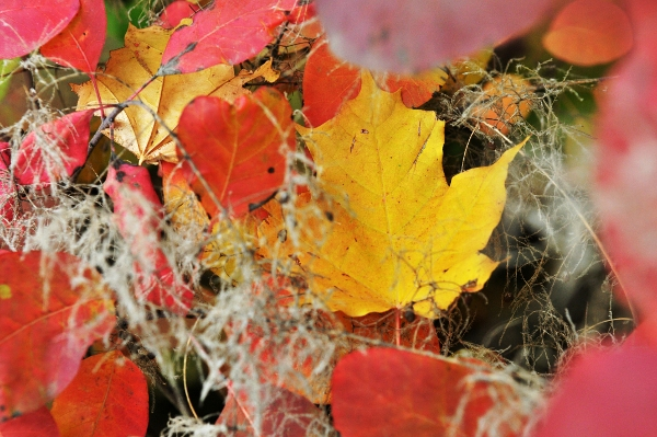 «Золотая осень 2010» в фотографиях