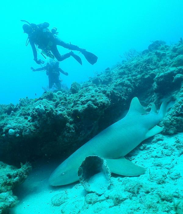 163 Wet Temptations9 - Знакомство с подводным миром в районе Палм-Бич с борта Wet Temptations