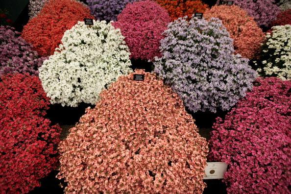 Цветочное шоу в Челси. Фотообзор