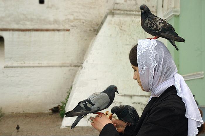 171 go9 - Голуби. Международный День птиц