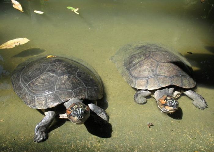 Удивительные животные, обитающие в бассейне реки Амазонки