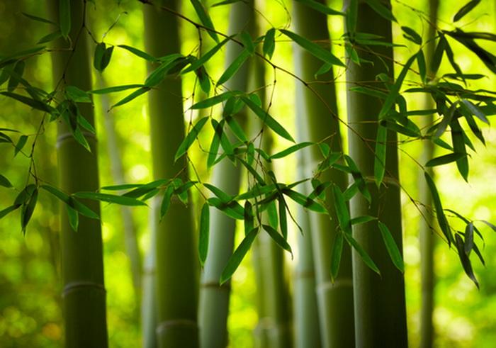 Китайская подделка: несуществующая натуральная ткань из бамбука