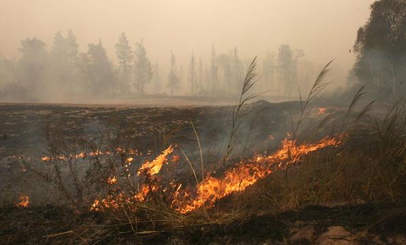 В Луховицком районе Московской области лесной пожар перекинулся на поселки. Фоторепортаж.