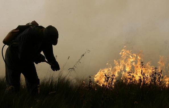 Жертвами лесных пожаров под Воронежем стали десять человек