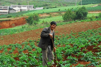 Китайские  овощеводы в Иркутске применяют   запрещенные удобрения