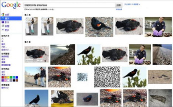 163 1401 0003 nay - Дожди из птиц, рыб и другие загадки