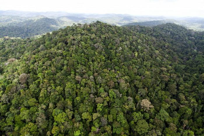 Пожары в районе Амазонки: три процента лесов сгорели за 12 лет