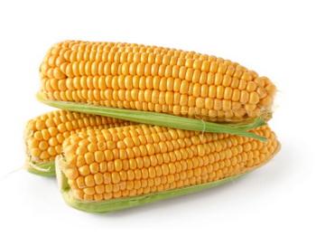 Крахмал кукурузный поможет извлечь из руды золото