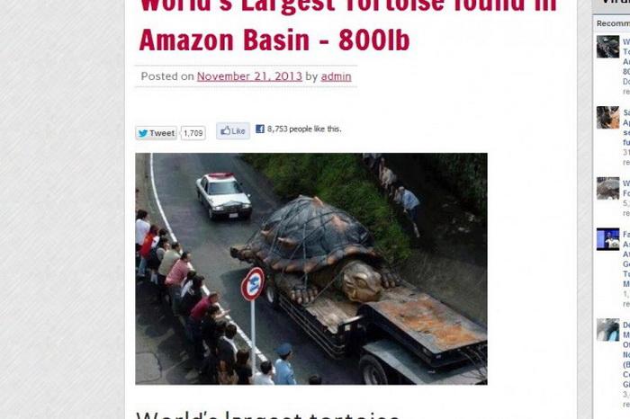 Информация о крупнейшей в мире черепахе оказалась ложной
