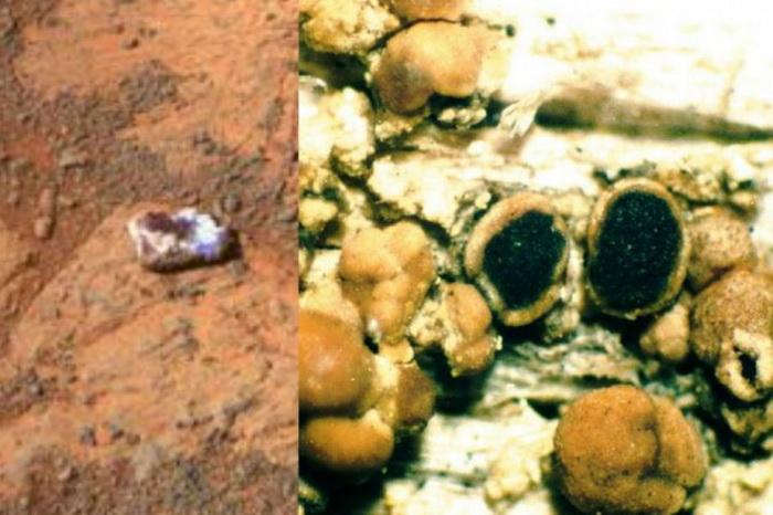 NASA исследует таинственный «камень», появившийся на Марсе
