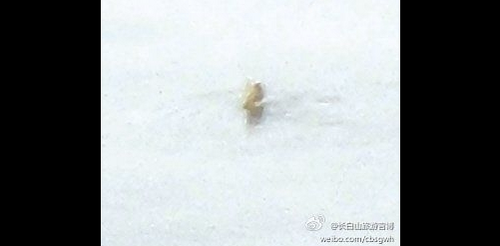 В высокогорном озере Китая замечено странное существо