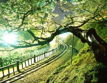 Гора Али в Тайване: древние леса, восход солнца