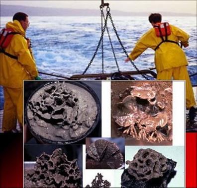 161 1319441098808 - На дне Марианской впадины обнаружены живые существа