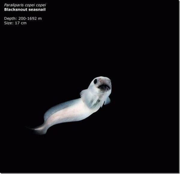 161 241011MVp 02 - На дне Марианской впадины обнаружены живые существа