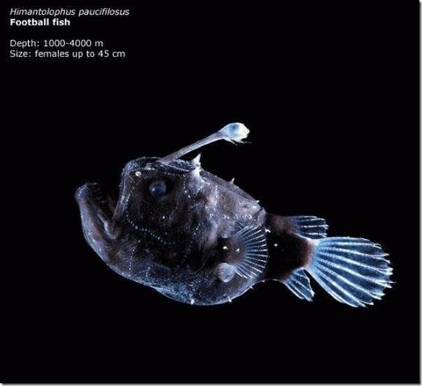 161 241011MVp 04 - На дне Марианской впадины обнаружены живые существа