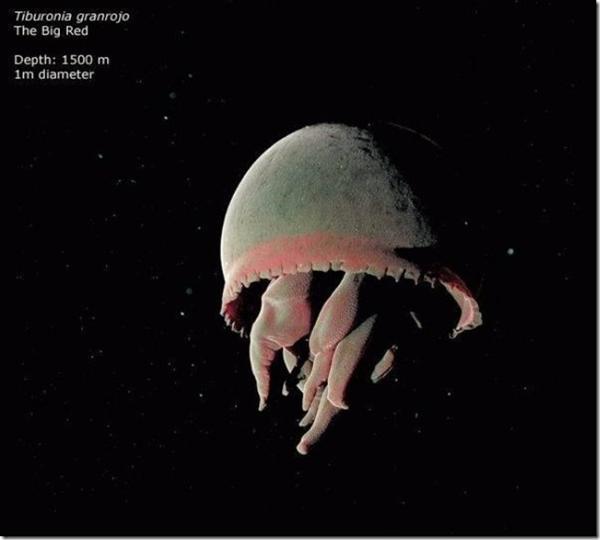 161 241011MVp 13 - На дне Марианской впадины обнаружены живые существа