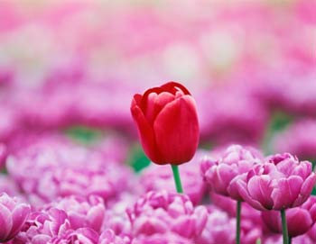 8 марта: все о празднике весны