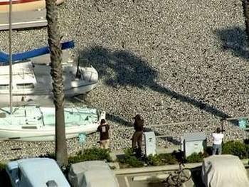 Возле Лос-Анджелеса погибли миллионы рыб