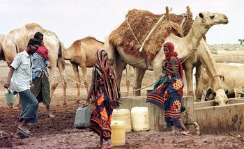 Африканский Рог страдает от засухи