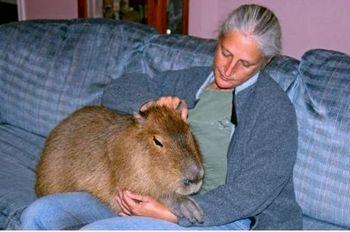 Законопроект «Об ответственном обращении с животными» принят в первом чтении