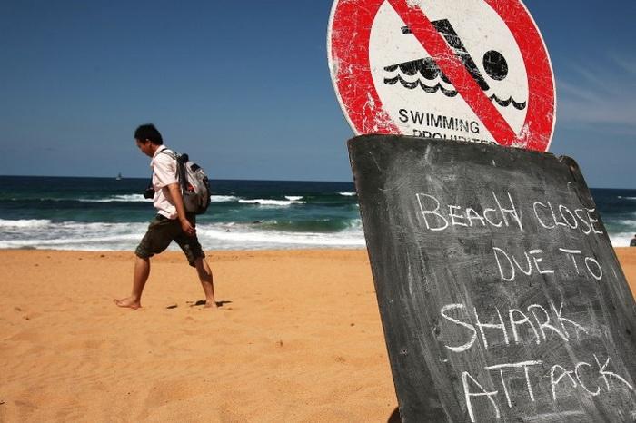 В Австралии идёт массовое уничтожение акул