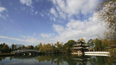Озеленение по-китайски: коррупция поражает даже парки