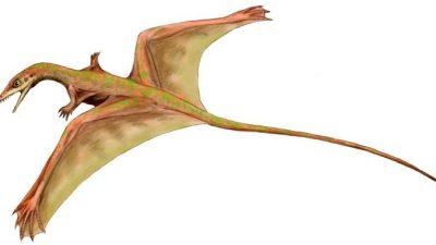 Похожего на летучую мышь динозавра обнаружили учёные