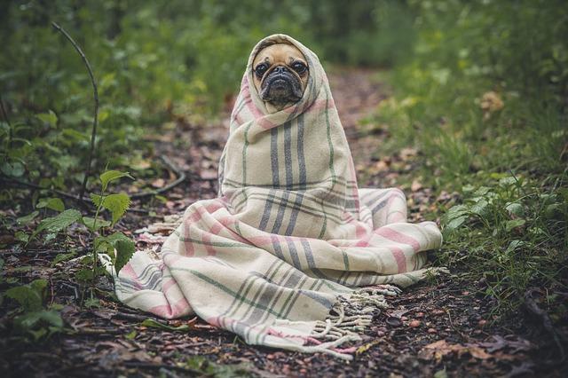 Foto Unsplashpixabay.comCC0 0.1 - Выбираем собаку под свой характер