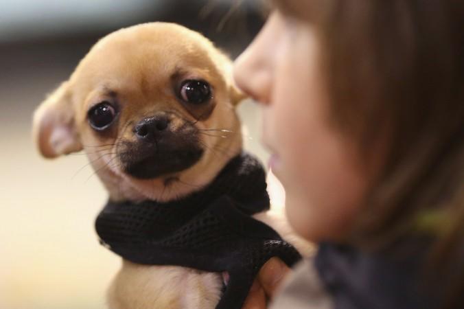 179 миллионов собак и кошек насчитывается в США. Фото: Sean Gallup/Getty Images   Epoch Times Россия