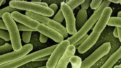 Учёные подтвердили опасность микробов, устойчивых к антибиотикам