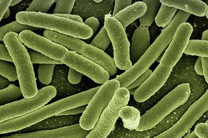 koli bacteria 123081 1280 676x450 1 - Учёные подтвердили опасность микробов, устойчивых к антибиотикам