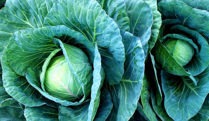 Овощи семейства капустных богаты питательными веществами, в том числе витамином C, витамином K, комплексом витаминов B, а также каротиноидами. Фото: jcesar2015/pixabay/CC0 Public Domain   Epoch Times Россия