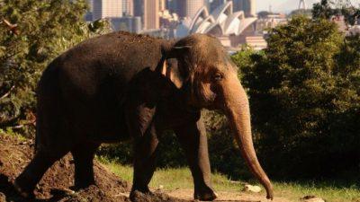 В Китае дикие голодные слоны атакуют деревни (видео)