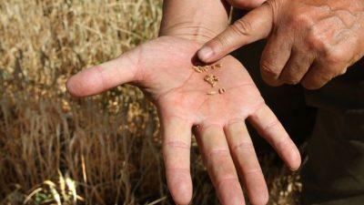 Чекусов: «Поставка зерна в Китай — это больше политика, чем бизнес»
