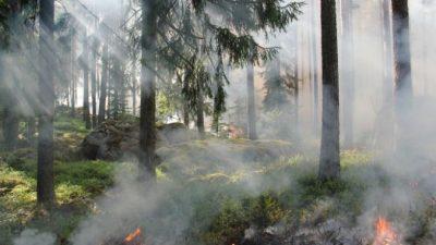 Восточная Сибирь страдает от лесных пожаров