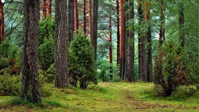 5 невероятных фактов о деревьях