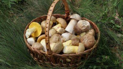 Классический рецепт маринования белых грибов