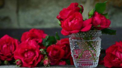 Розы — универсальный подарок на все времена