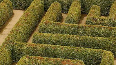 Огромный QR-код из 130 тысяч деревьев вырастили в Китае
