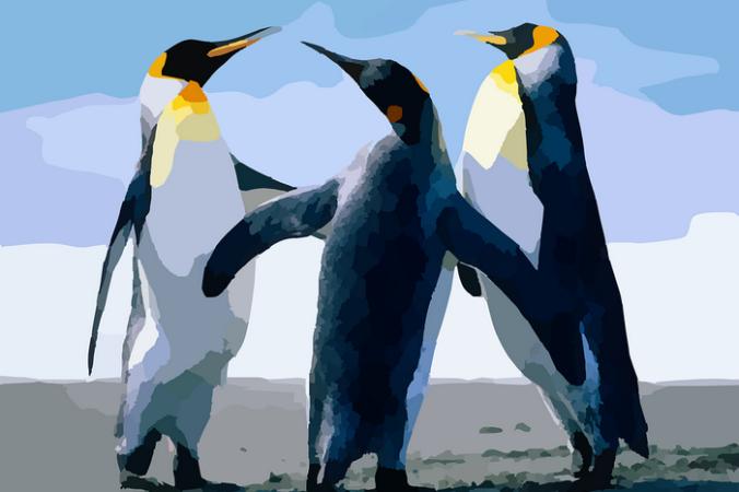 3a19a8301e3096d9ed5ad03cbeb67a2d 676x450 1 - Зоопарк пригласил посетителей посмотреть на пингвинов... Это было нечто!