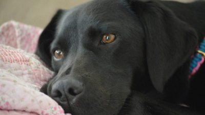 Верный пёс разбудил маму мальчика и этим спас ему жизнь