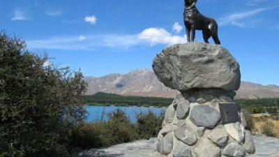 4 трогательные истории о собаках, которым поставили памятники