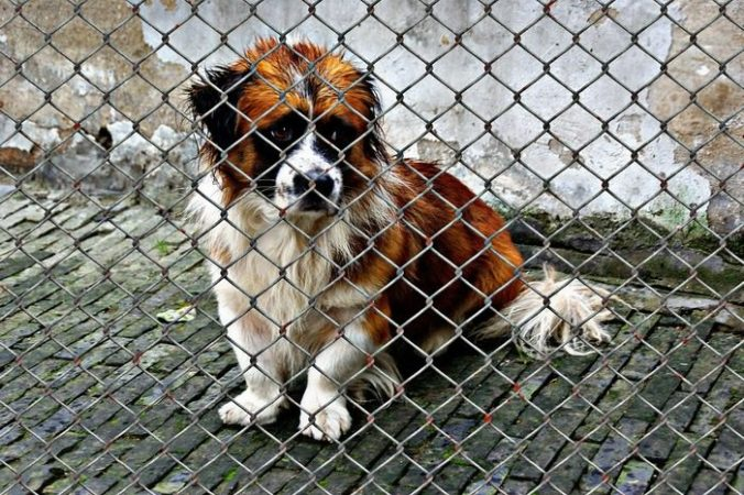 Школьница из Костромы перечислила 20 тыс. приюту для животных. Так она потратила папины алименты